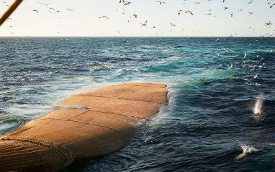 Det uudforskede potentiale i mesopelagisk fiskeri