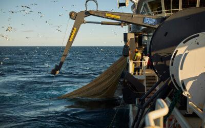 DPPO undersøger dyrevelfærd i fiskeriet