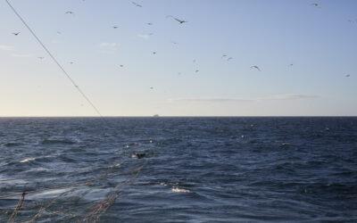 DPPO med i nyt paper, som kan ændre forståelsen af makrellen